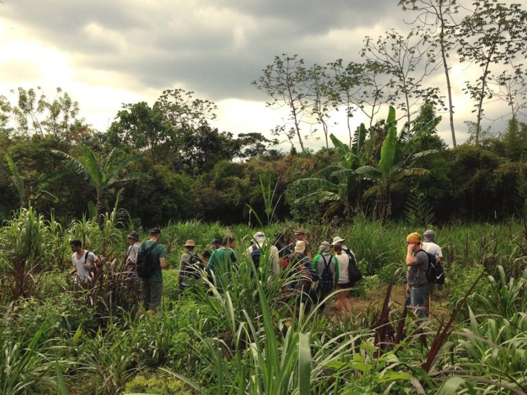 Jungle Permaculture